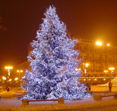 Happy holidays! A Christmas tree and food blogs in Hungary ...